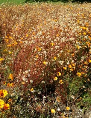 Kirstenbosch - Botanical Garden